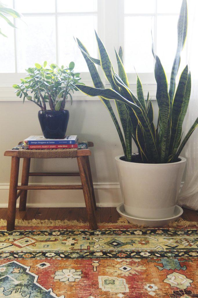 Hard To Kill House Plants Snake Plant Jade Plant