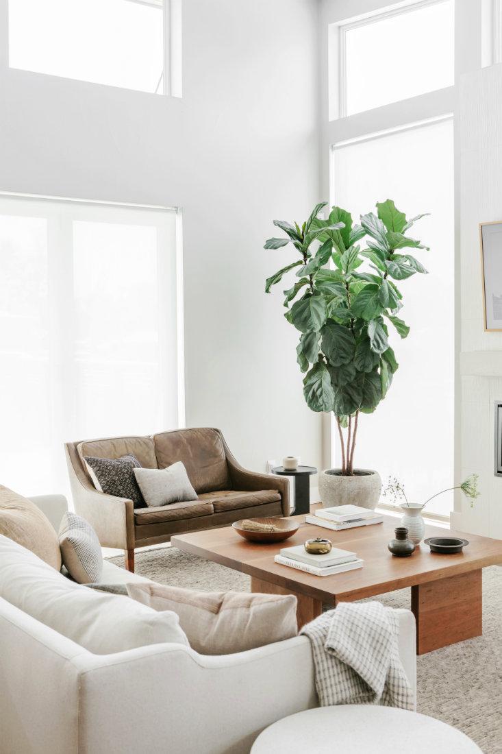living-room-indoor-plant-denver-co